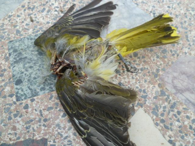 Identification oiseaux 1-p10967