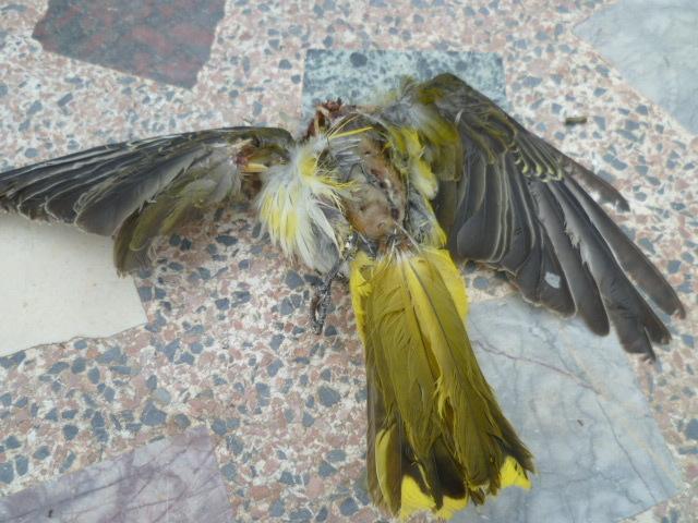 Identification oiseaux 1-p10968