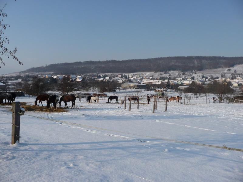 Vive la neige à Wangen ! P1000311