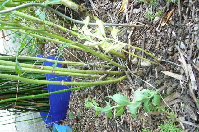 Les plantes des ami(e)s - Page 4 P1300856