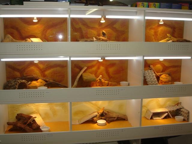 Ma nouvelle salle d'élevage en travaux Dsc09610