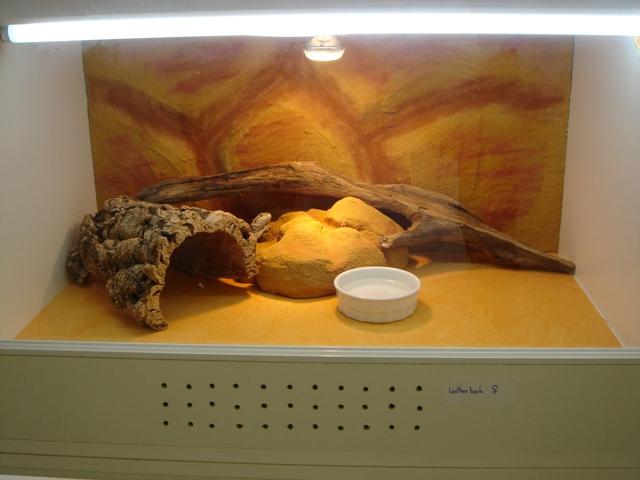 Ma nouvelle salle d'élevage en travaux Dsc09614