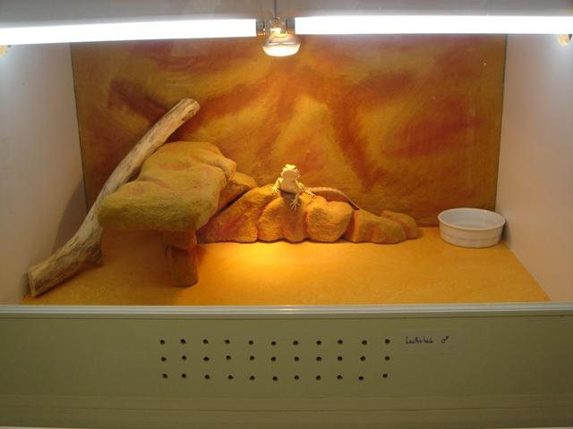 Ma nouvelle salle d'élevage en travaux Dsc09615