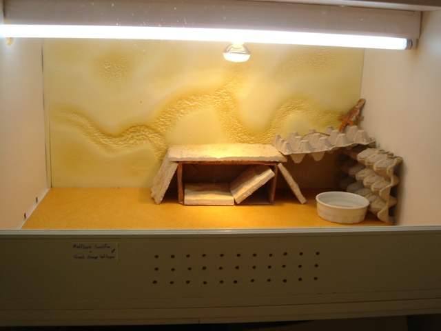 Ma nouvelle salle d'élevage en travaux Dsc09619