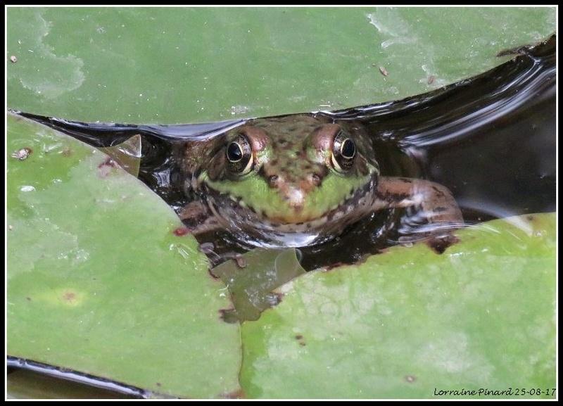 Surprise à l'étang 25-08-10