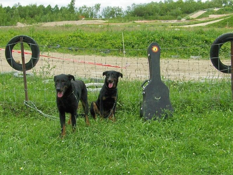 Mes Beaucerons...chiens de course !! 100_0914