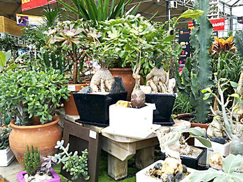 Jardinerie en région parisienne 1_ense10