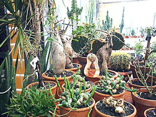 Jardinerie en région parisienne 2_ense10