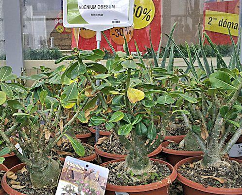 Jardinerie en région parisienne Adeniu10