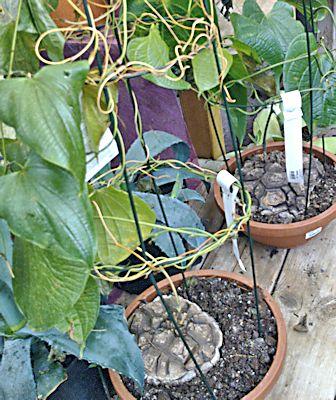 Jardinerie en région parisienne Diosco11