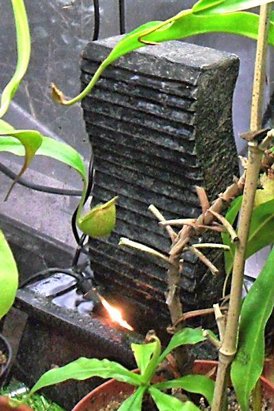 Une fontaine dans mon terra  Fontai19