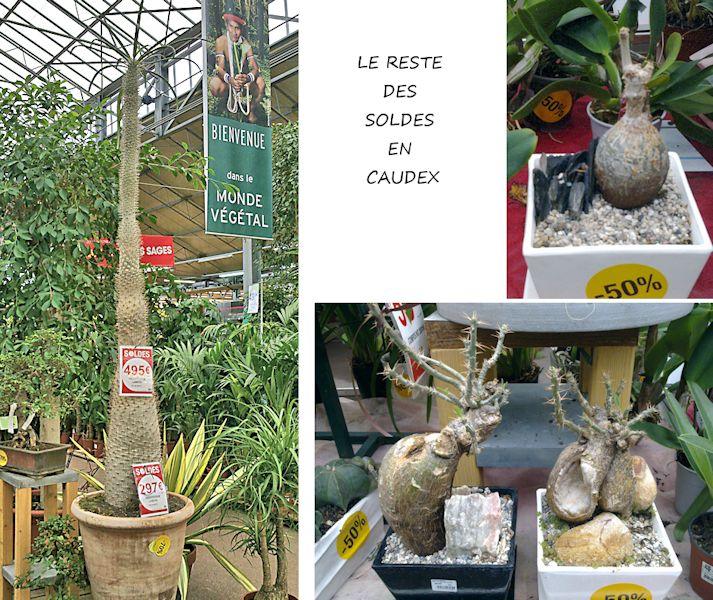 Jardinerie en région parisienne Les_so10