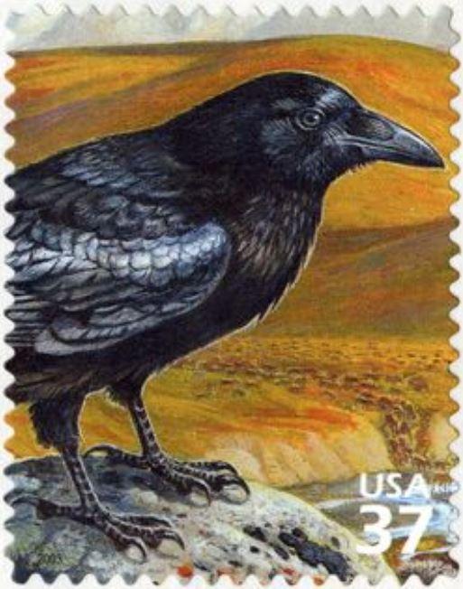 Krähenattacke - Postauslieferung eingestellt Kryhe110