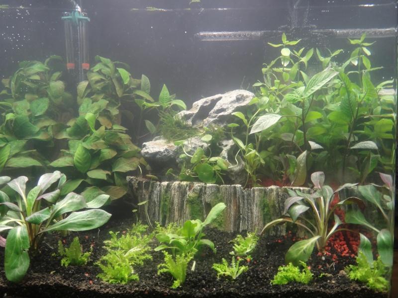 Mon nano aquarium 60L Dsc02110