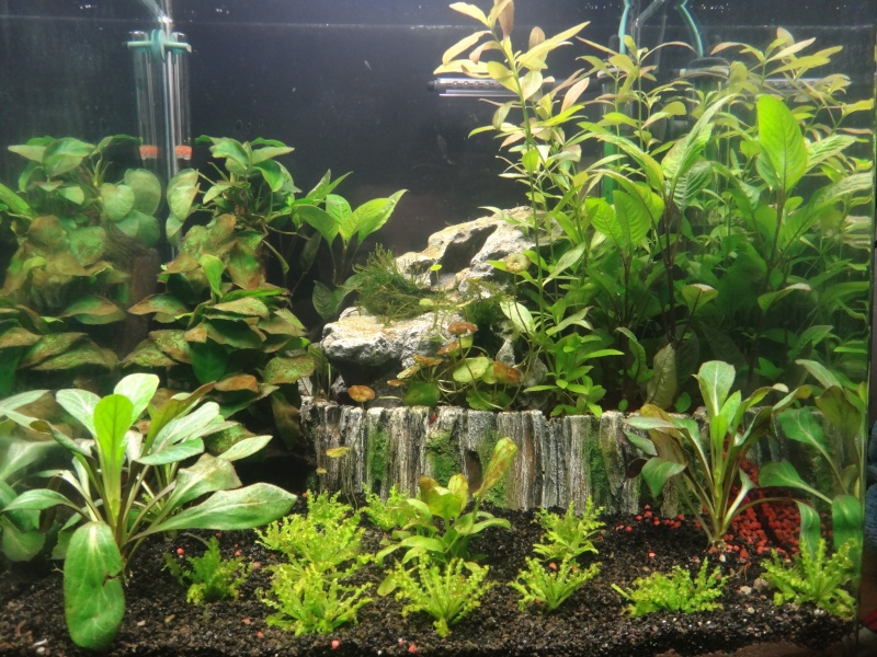 Mon nano aquarium 60L Dsc02111