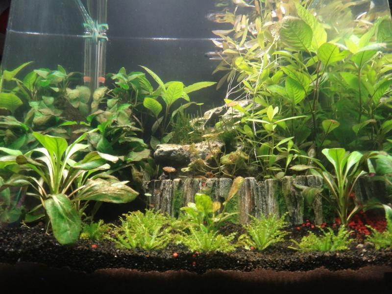 Mon nano aquarium 60L Dsc02210