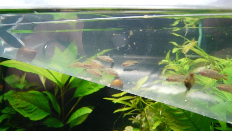 Mon nano aquarium 60L Galaxy10