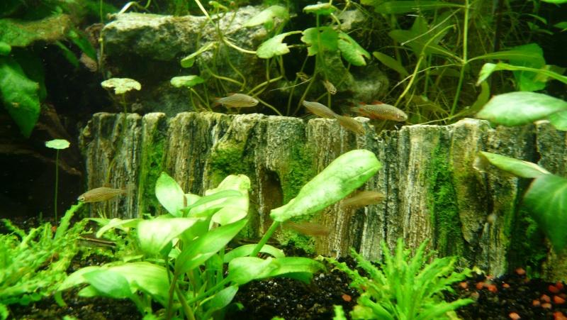 Mon nano aquarium 60L Galaxy12