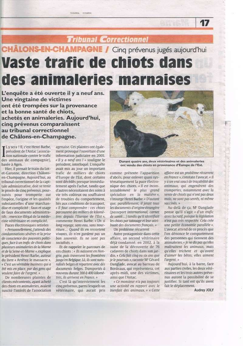 Trafic de chiots en animalerie (Marne) Ccf13010
