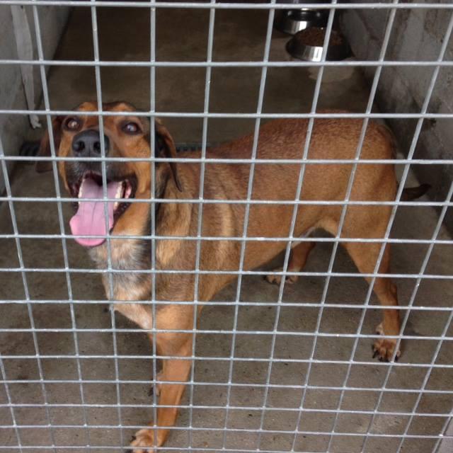 Urgence fourrière Bretagne pour 4 chiens délai 27 / 28 juillet 2017 20269910