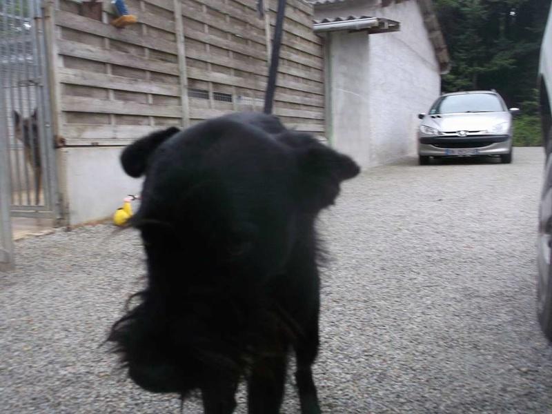 Urgence fourrière Bretagne pour 5 chiens délai 11 aout 2017 X_schn10