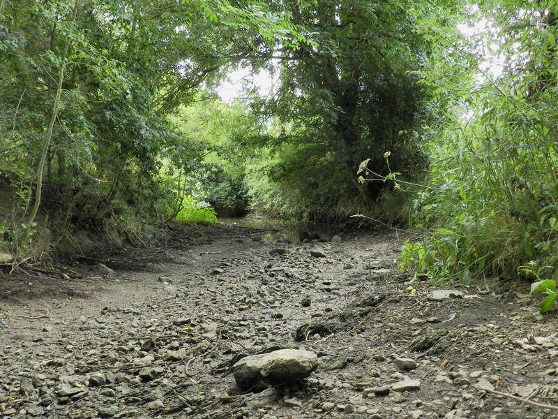 Dans l'Ouest la rivière est à sec (24/06/2017) Vauvyr12