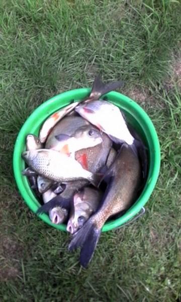 Pêche mémorable 20_08_15