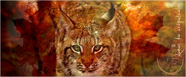 ♠Crep's Galery♠ Lynx11
