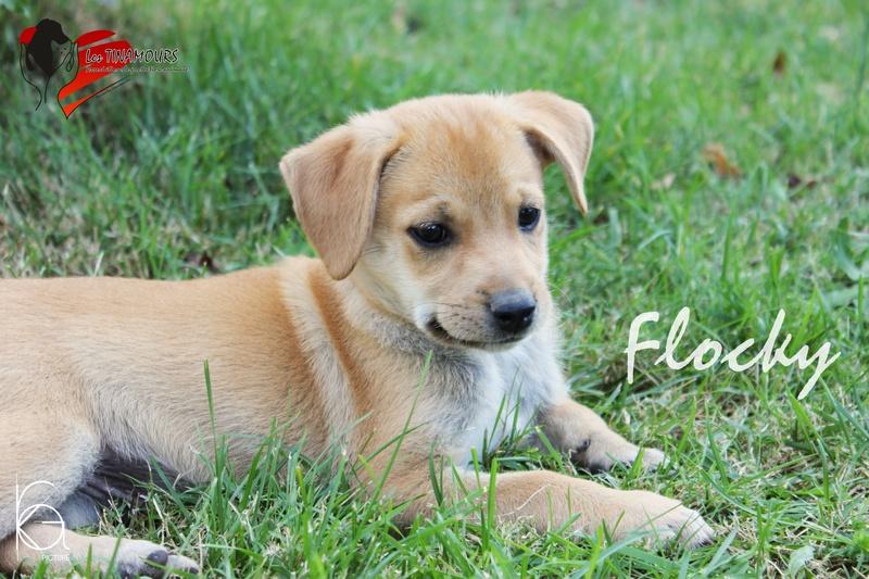 Flocky adopté dans le 69 Flocky10