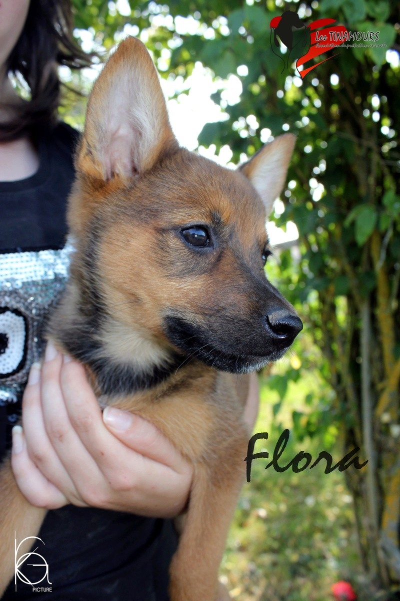 Flora adoptée Flora_11