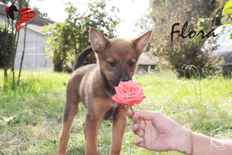 Flora adoptée Flora_13