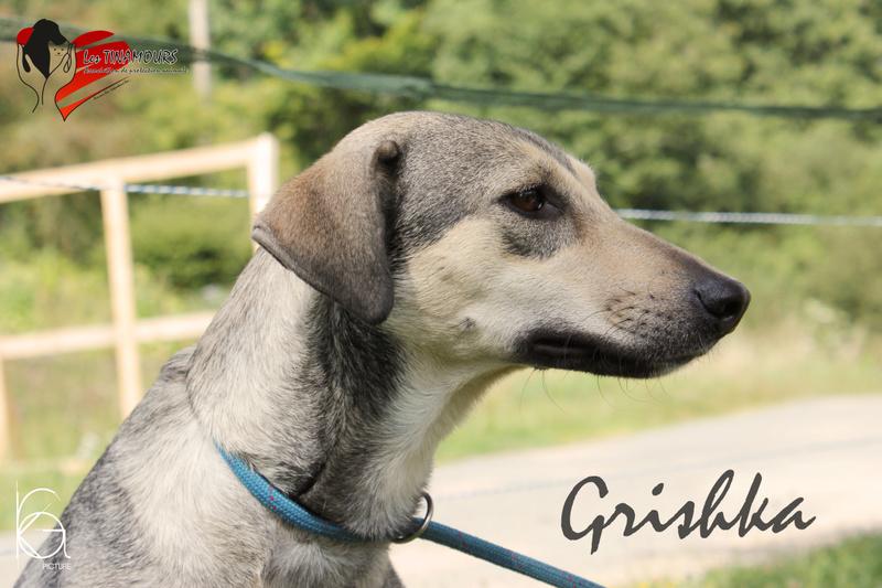 Grishka adoptée Grishk10