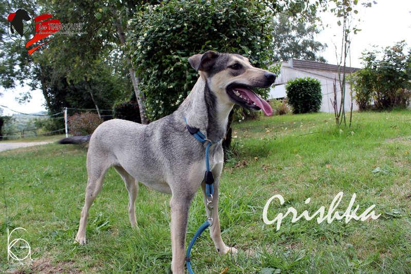 Grishka adoptée Grishk12