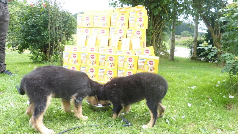 Animal Webaction P1220810
