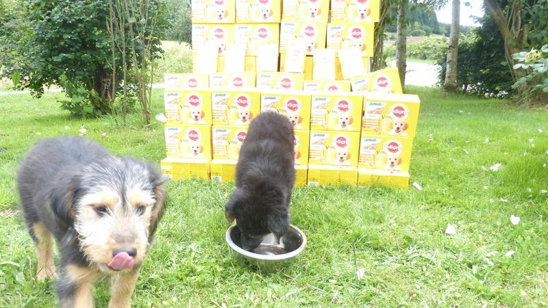 Animal Webaction P1220811