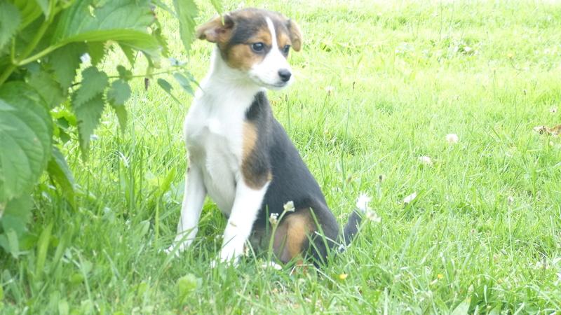 Nath rebaptisée Vanille adoptée par la famille de Nougat  P1220913