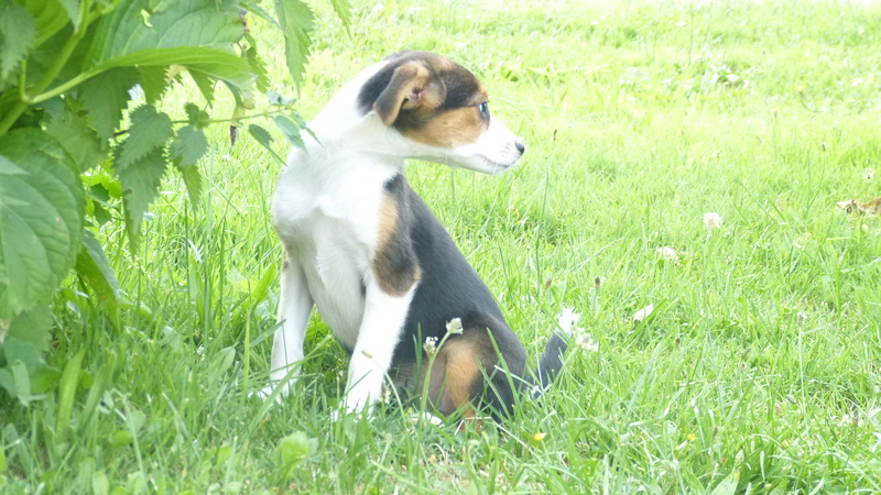 Nath rebaptisée Vanille adoptée par la famille de Nougat  P1230012