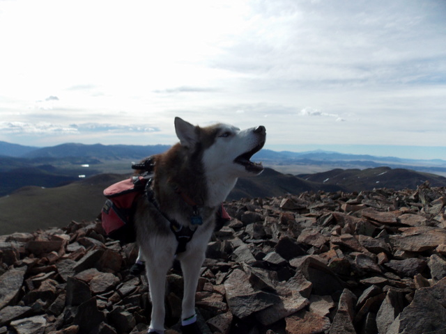 Hiking with Dogs~Take two, Mt. Boreas, 13,082ft~ Summit Dscn0416