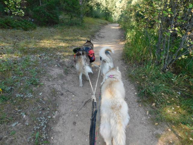 Sierra, Jack & Finn - Page 9 Dscn2210
