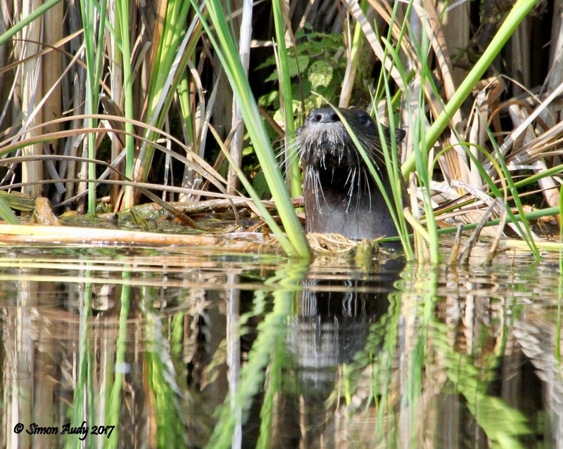 Loutre Img_1412