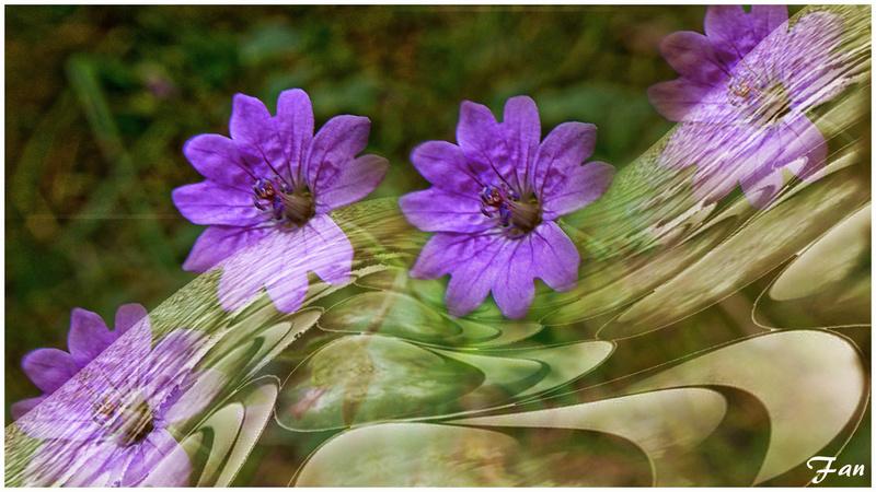 Fabrique d' IMAGES de Vagabonde (album:2) - Page 5 Fleur_10