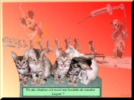la Reine_des_bois   Drogue10