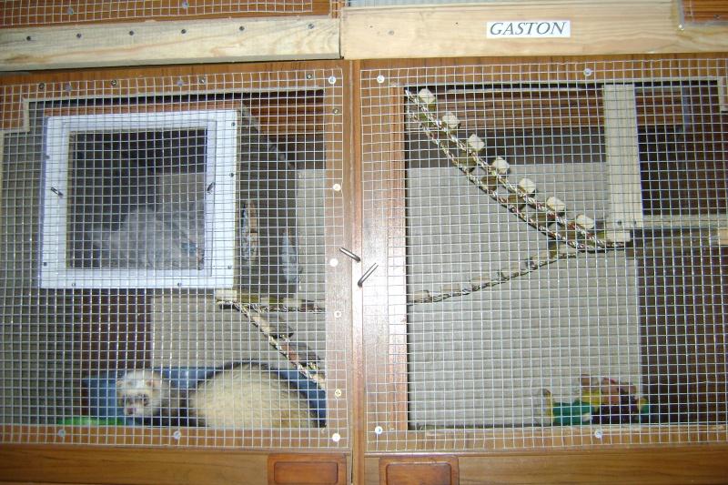 Leurs cages Dsc02510