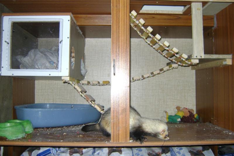 Leurs cages Dsc02511