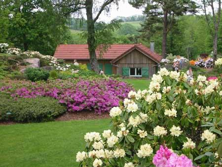 Bienvenue dans les Vosges Callun10