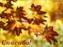 ОСЕННИЕ ПОЖЕЛАНИЯ  53e5c610