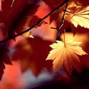 ОСЕННИЕ ЛИСТЬЯ Autumn11