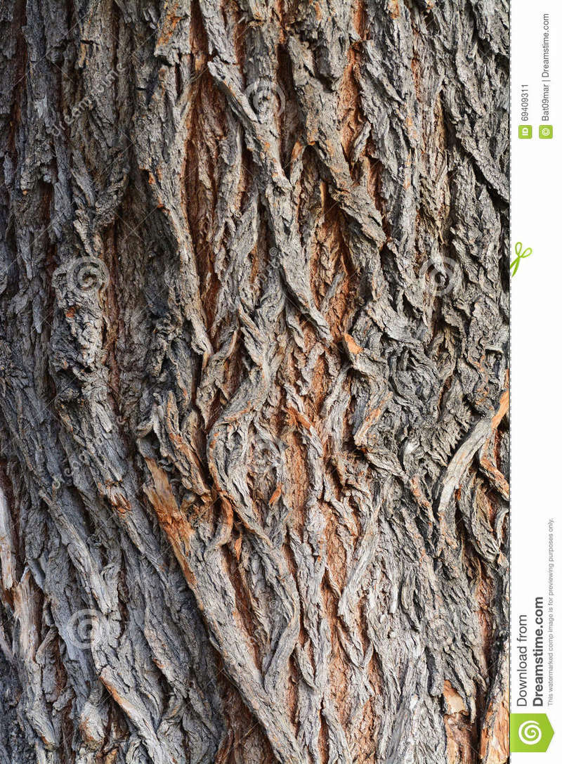 [Identification arbre sur pied] Il est gênant pour les voisins... Textur10