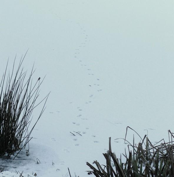 Traces dans la neige P1000412