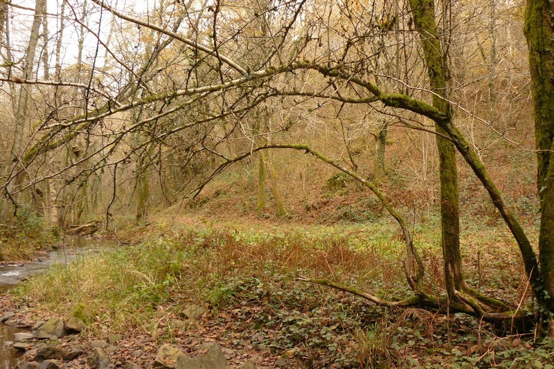 Ballade en forêt P1070914